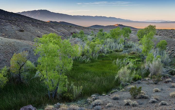 Bonanza Spring. Photo by Michael E. Gordon.