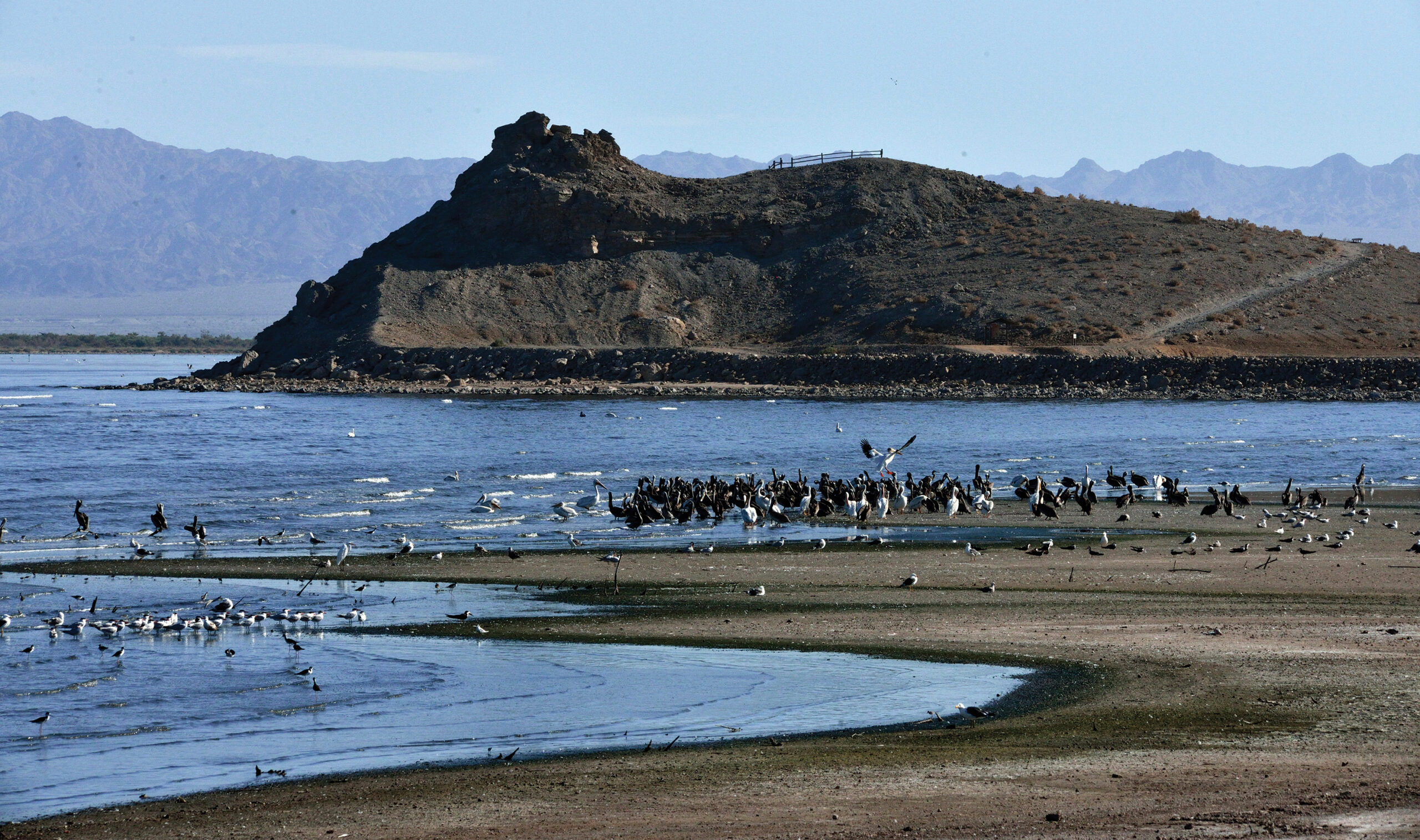 The view is from the Refuge's shoreline on the Salton Sea near Rock Hill, illustrating abundant foraging opportunity for many bird species. Photo by U.S. Fish and Wildlife Service