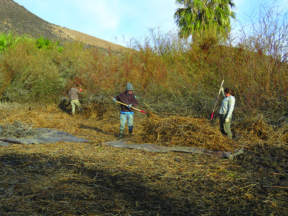Clearing the marsh. Photo by Patrick Donnelly