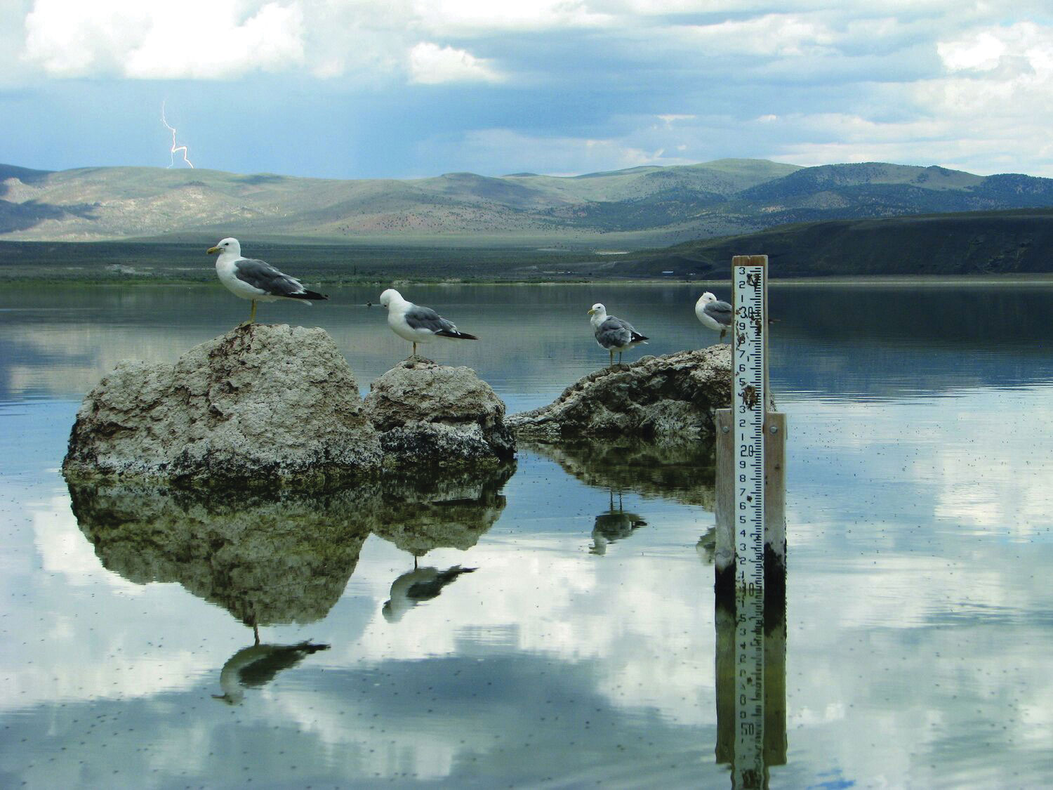 California Gulls next to the Lake Level Gauge that determines how much water will be released to Los Angeles. Photo courtesy of the Mono Lake Committee